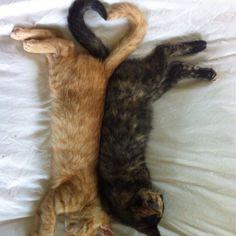 Love #PawNation #kittens #animals
