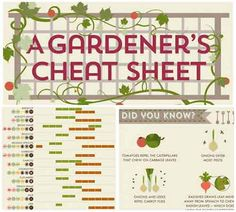 The Ultimate Gardners Cheat Sheet – Spring, Summer And Winter Gardening - Lil Moo Creations