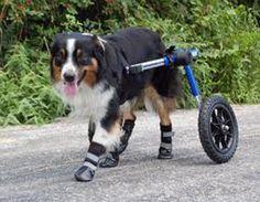 14 Perros Discapacitados son Felices de Estar Vivos http://www.sitioviral.com/14-perros-discapacitados-son-felices-de-estar-vivos/