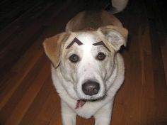 Dogs with eyebrows...funny stuff.