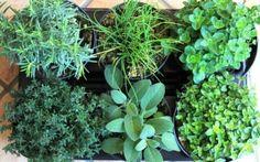 Come coltivare (e raccogliere) le erbe aromatiche e le piante selvatiche – Parte I