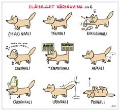 learn Finnish with the smile :D eläinlajit värikuvina