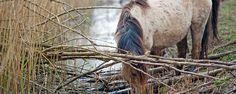 In de winter worden onze dieren meer blootgesteld aan vochtigheid en kou. Een kwaal die vaak in de winter bij paarden opspeelt is mok, hoewel de winter niet het enige moment is waarop paarden hier last van kunnen hebben.