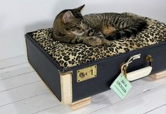 Cat Furniture Design Vintage Suitcases