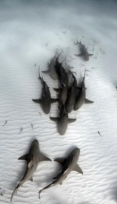 Sharks on the ocean floor - Tubarões Beautiful Creatures, Animals Beautiful, Fauna Marina, Underwater Life, Underwater Squad, Ocean Creatures, Tier Fotos, Sea And Ocean, Ocean Beach
