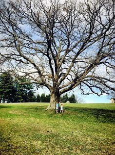 Big tree in Shippenville. Clarion County Photo of the Day, May 7, 2013. By Chris Guntrum