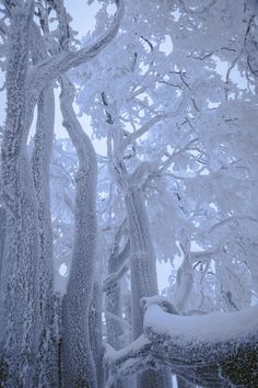 Grove In Snow ~ Markus Pavlowsky Photography