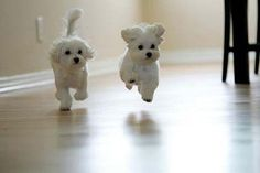 Who knew? Puppies can fly