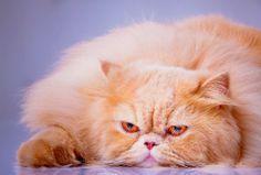 Bytowe, lecznicze, weterynaryjne i zwykłe karmy dla kotów – czym się one różnią?