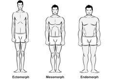 Workouts and Diet Plans for Ectomorph, Mesomorph and Endomorph Body Types