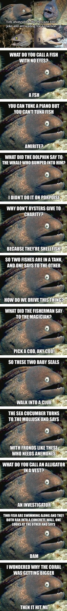 The best of Bad Joke Eel  // funny pictures - funny photos - funny images - funny pics - funny quotes - #lol #humor #funnypictures