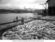 Fishermen with salmon catch at dock, Klondike Gold Rush, Seattle Division, WA