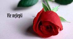 Rose Care: Make Your Valentine's Flowers Last Lovely Flowers Wallpaper, Flower Wallpaper, Nature Wallpaper, Hd Wallpaper, Sunset Wallpaper, Car Wallpapers, Rose Images, Rose Pictures, Rose Photos