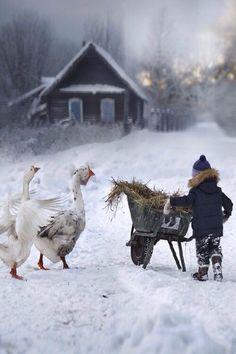 "Rural vignettes capture the warmth of winter ""By Elena Shumilova "" Winter Szenen, Winter Time, Polo Norte, Winter's Tale, Snowy Day, Perfect World, Plein Air, Belle Photo, Illustrations"