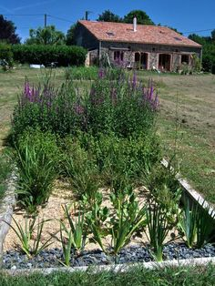 32 Permaculture, Plantation, Shade Garden, Photos Du, Sustainability, Harvest, Home And Garden, Architecture, Water