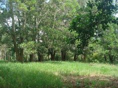 Aquiles Rojas - Real Estate Advisor: Venta de Solar en Jarabacoa - 27312 - RD$1,680,000...