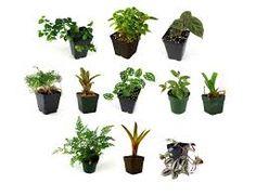 Vivarium safe plants                                                                                                                                                                                 More