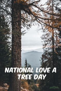 Have you heard of national love a tree day? Check out the ins and outs of this fun national event and ways you can celebrate! Bald Cypress Tree, Cypress Trees, Fruit Trees, Trees To Plant, Tree Day, Tree Identification, Another A, Permaculture Design