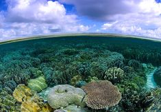 The BigPicture Natural World Photography Competition exhibit, on display at the California Academy of Sciences features 48 photographs from 27 countries. Papua Nova Guiné, Nature Landscape, Photography Competitions, World Photography, Natural World, Under The Sea, Screen Shot, Surrealism, The Incredibles