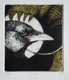 Crow by Louise Scott (etching)