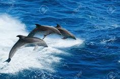 #BottlenonDolphins #BlueOcean #Sea #a beautiful moment