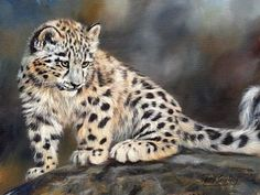 Cats Painting - Snow Leopard Cub by David Stribbling
