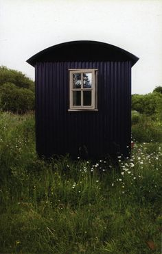 Shepherds hut in a field of daisies. Daily rotation to fresh vistas.