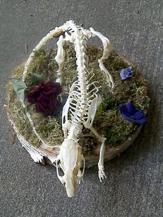 Real Jumbo Rat Skeleton Articulation