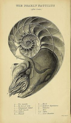 A manual of the Mollusca :.  London :Virtue & Co.,1868
