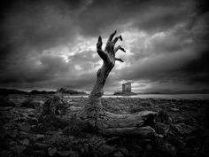 black and white nature photos - Google Search