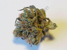 Chunk Norris bud  #marijuana #weed #dank #420 #seeds #cannabis #alchimiaweb #alchimia #growshop #terpenes #terps