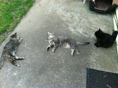 Koukla, Tiger & Mamma