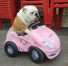 Do you wanna go on a ride?