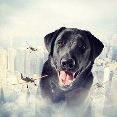 Surreal Dog Photography by Sarolta Ban - Dog Milk for Arv