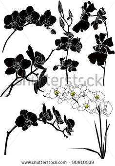 Orchids flowers it is isolated - stock vector