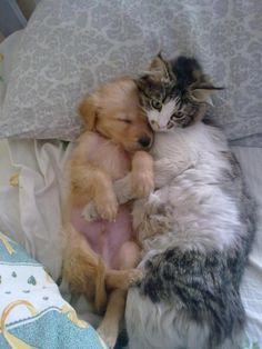 como perro y gato.