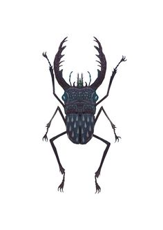Stag beetle  A4 giclee print by vladimirsart on Etsy, $25.00