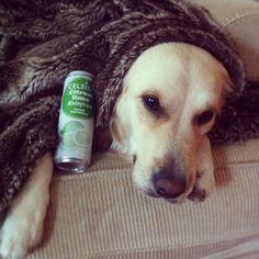 Drar ut en nyvaken hund på PW, bud på att fylla henne med Celsius för lite energi #celsiussverige #Padgram