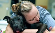 Compassion Fatigue: The Cost of Caring | Veterinary Team Brief