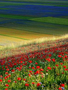 Google+ Flowering - Russo Francesco Photography www.frpix.com Flowering in Sibillini Mountains National Park, Italy. Marche