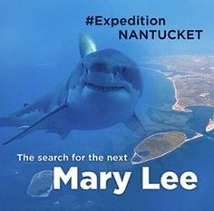 Ocearch on their 27th expedition
