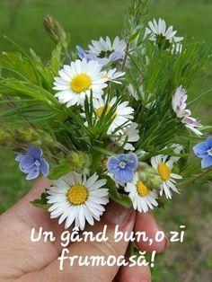 Plants, Pictures, Flowers, Photos, Plant, Grimm, Planets