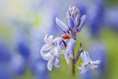 Photo Step into Spring by Jacky Parker on 500px