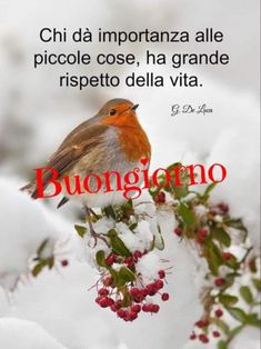 Italian Greetings, Say Hello, Bellisima, Good Morning, Animals, Madonna, Snow, Messages, Animales