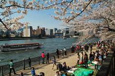 A great shot capturing all that is uniquely Tokyo in spring. Taken early April Tokyo Tour, Great Shots, Cherry Blossom, Dolores Park, Street View, Real Estate, Tours, Japan, River