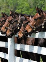 futtermanufaktur - individuelle Pferdefütterung, Ergänzungsfutter, Pferdefutter