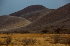 Vista geral da caatinga, ecossistema que predomina em Canudos e em toda sua área de influência | VÍCTOR MORIYAMA