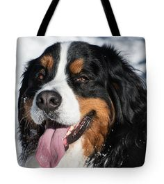 Tote Bag, Bernese Mountain Dog Smile, Portrait, Animal Prints, Pet Prints, Winter Photography, Fine Art Photo Print, Fashion, Picture by Ultimateplaces on Etsy