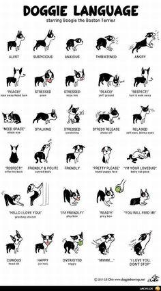 """""""Mit einem kurzen Schweifwedeln kann ein Hund mehr Gefühl ausdrücken, als mancher Mensch mit stundenlangem Gerede."""" (Louis Armstrong)"""
