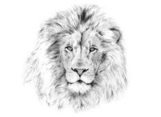 Lionhead by maruyama-tyson devi durga львы, искусство, тату Lion Tattoo Sleeves, Sleeve Tattoos, Animal Sketches, Animal Drawings, Smal Tattoo, Lion Flower, Lion Sketch, Lioness Tattoo, Lion Tattoo Design